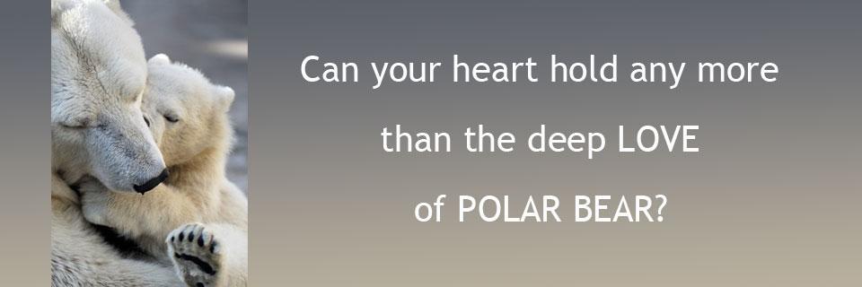 polar-bear-960v2