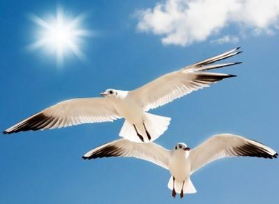 seagulls-400